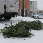 Прокопчанина с 11 елками неизвестного проихождения задержали сотрудники ГИБДД