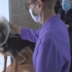 В Юрге ищут заботливых хозяев для щенка, которого спасло чудо