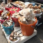 В Кузбассе планируют увеличить производство грибов