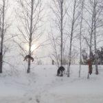 В Юргинском районе стаю собак повесили на деревьях вдоль трассы