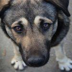 Кемеровские власти потратят 6 миллионов рублей на бездомных животных