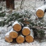 В Таштаголе осудили «чёрных лесорубов», на двоих сгубивших 30 деревьев