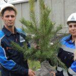 Кузбасские ученые подобрали растения для рекультивации на разрезах компании «Стройсервис»