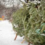 Новокузнечане могут сдать ненужные елки на доброе дело