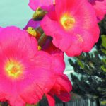 Цветок гладиаторов, который покоряет женщин