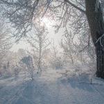Умеренные морозы ожидают кузбассовцев в предпоследний день новогодних каникул