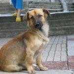 В Кемерове зоозащитники выиграли контракт на отлов бездомных животных
