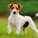 Кемеровчанка заработала 100 тысяч рублей, продавая несуществующих собак