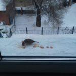 В Новокузнецке из окна выпал полуторагодовалый ребенок
