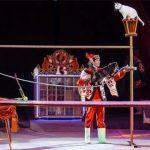 Цирки Кузбасса возобновили работу спустя 11 месяцев