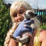 В Кемерове создают народный приют для бездомных животных