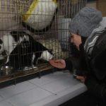 В Кузбассе энергетики помогли бездомным животным выжить в морозы