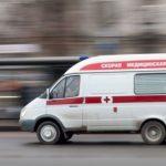 Житель Красноярска пытался натравить собаку на фельдшера