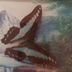 В Ленинске-Кузнецком предлагают поймать бабочек
