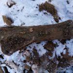 На Притомском проспекте в Кемерове нашли кости мамонта