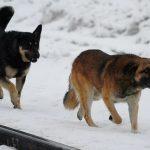 В Чебулинском округе выбрали подрядчика на отлов безнадзорных собак