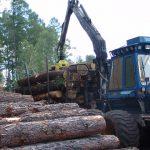 Руководитель кузбасского предприятия вырубил 300 метров леса