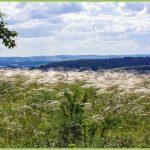 В Прокопьевском округе появилась особо охраняемая природная территория