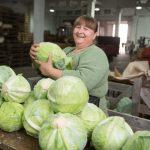 В Кузбассе замедлился рост цен на ингредиенты овощного салата