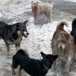 В Мысках появились собаки-каннибалы: комментарий эксперта