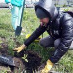 В год 300-летия Кузбасса по региону активисты высадили тысячи деревьев