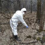 В Кузбассе стартовала вакцинация диких животных от опасного вируса