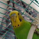 Зоозащитники пожаловались на обращение с попугаями в КемГУ