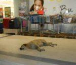 Дело в суд: в Прокопьевске братья зарубили бродячего пса