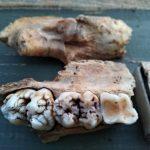 Двор новокузнечанина кишит останками древних чудовищ
