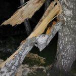 В Новокузнецке дерево придавило отца с сыном. СК возбудил уголовное дело