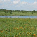 Охотоведы Прокопьевского округа обнаружили беспощадного браконьера