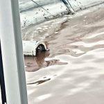 Таштагольские спасатели помогли двум собак, попавшим в водоотстойник