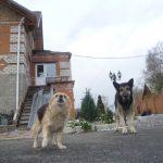 В Кузбасском городе намереваются решить проблему с бродячими собаками