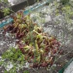 Крупный град уничтожил урожай в нескольких городах Кузбасса