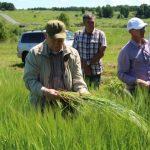Аграрии оценивают качество всходов на полях Кузбасса
