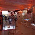 День открытых дверей в краеведческом музее: как это было