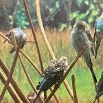 Кемеровский госунивреситет оштрафовали после жалобы на плохое содержание попугаев