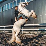 Конь из Кузбасса стал звездой интернета