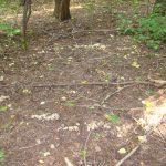 Преподаватель объяснила природу происхождения ведьминых кругов в лесах Кузбасса
