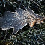 В Кузбассе ожидаются первые заморозки