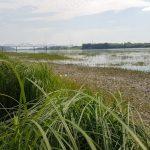 В Кузбассе сохранится теплая погода без дождей