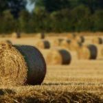 В Кузбассе продают фермерский домик за 100 миллионов