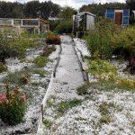 Крупный град уничтожил урожай жителей Прокопьевска