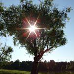 Новая неделя в Кузбассе начнётся с потепления