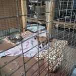 В Юрге отметили Всемирный день бездомных животных