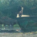 Медведя заметили в Анжеро-Судженске
