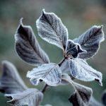 Осень в Кузбассе начнётся с заморозков