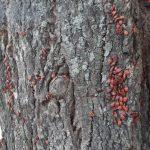 Кемеровчанка пришла в ужас от красного дерева