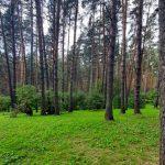 В кузбасских лесах за три дня потерялись 70 человек