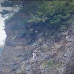 В Кузбассе собака попала в западню на неприступной скале